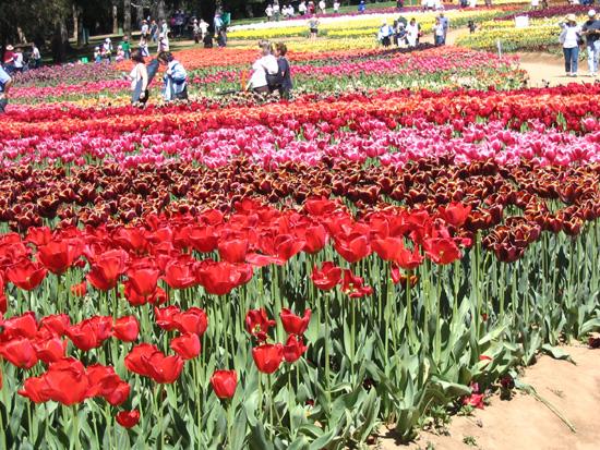 Floriade 05 in full flower