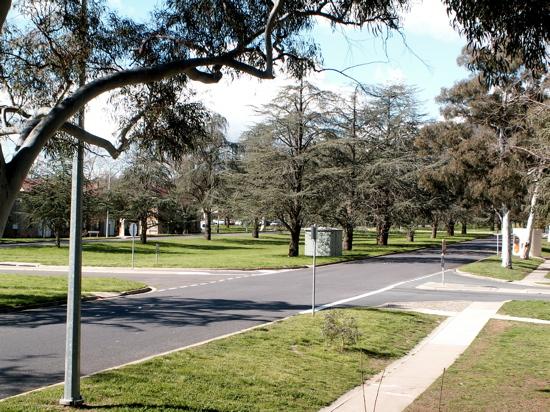 A Green Ainslie Avenue