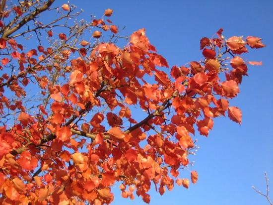 Leaves of Yarralumla