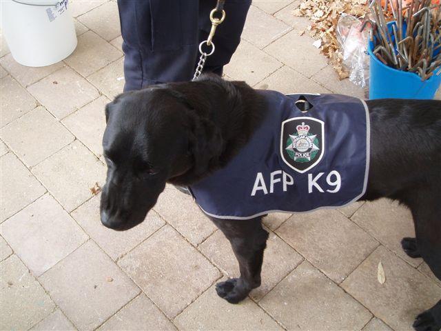 AFP Working Dog
