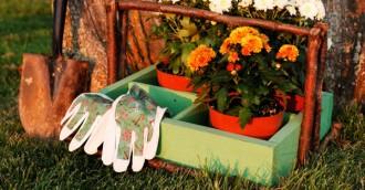 Autumn gardening in Canberra