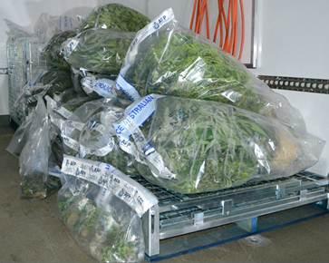 cannabis-police-wrap-300714