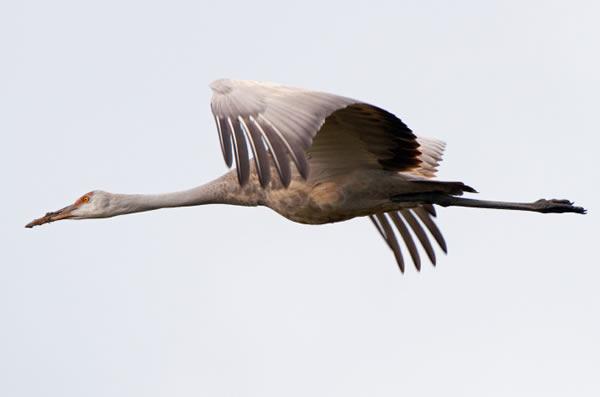 birdman-stock