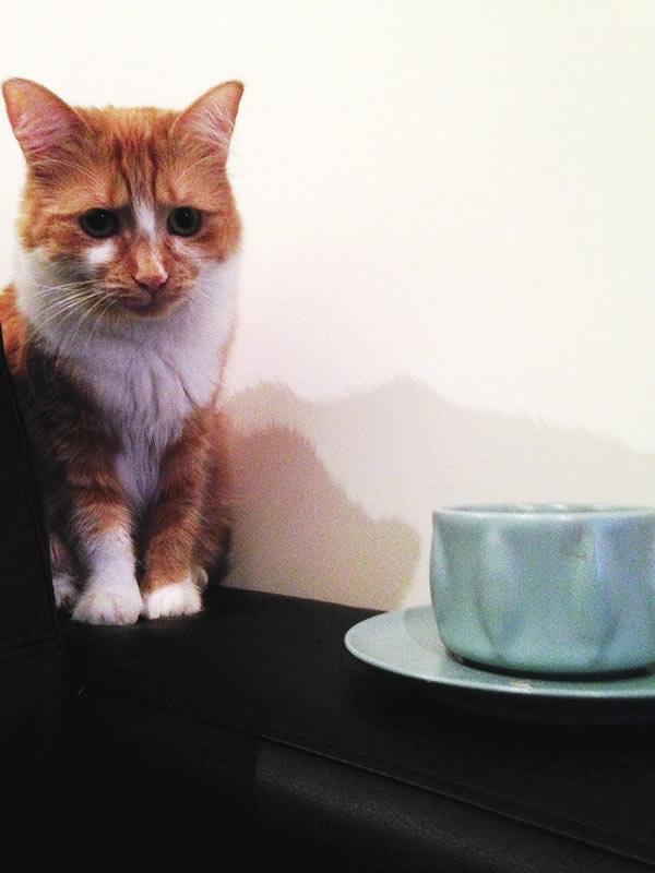 cat-tea-cup