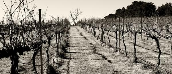 eden-road-vineyards