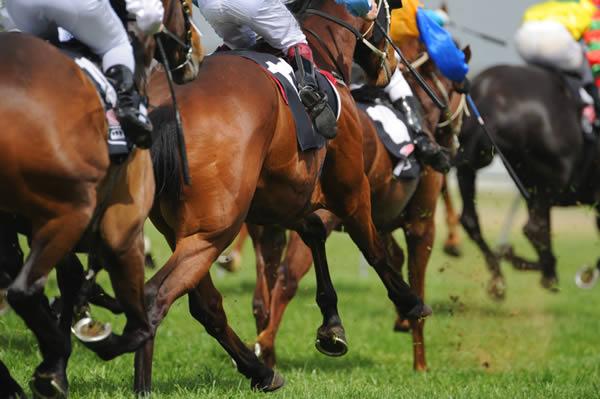 horse-racing-stock
