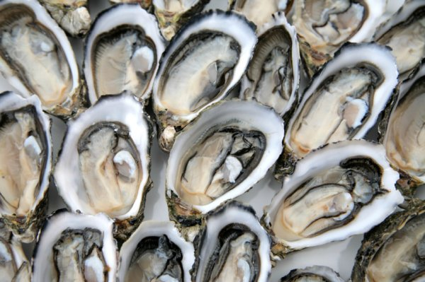 oysters-stock