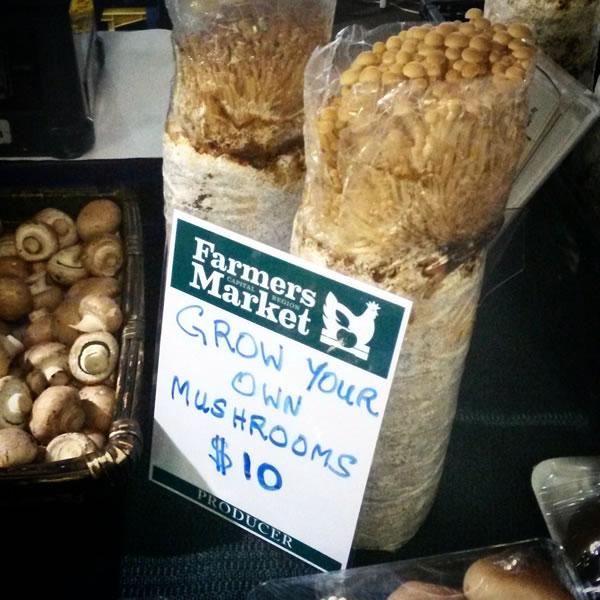 mushroom-markets-c