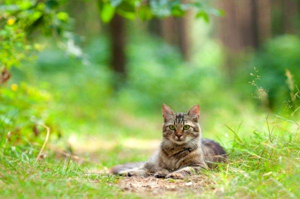 cat-stock-141014
