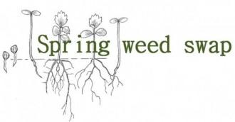 Spring weeds swap in on this weekend