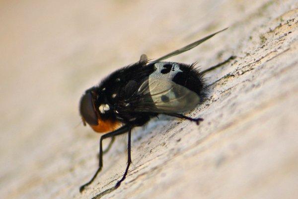 091114-fly1