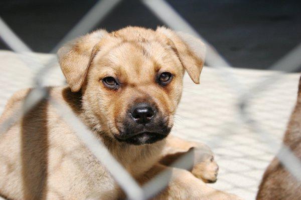 dog-stock-101114