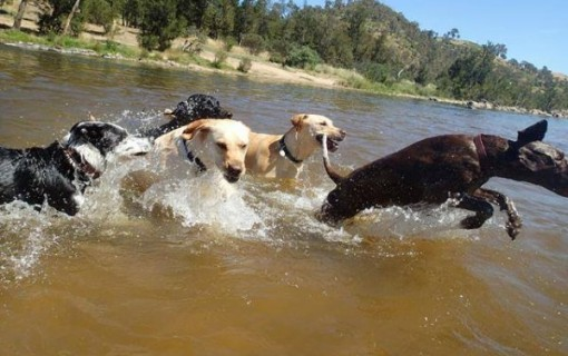Hot dog! Our favourite Canberra dog swimming areas