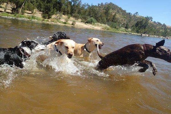 dog-swim-a
