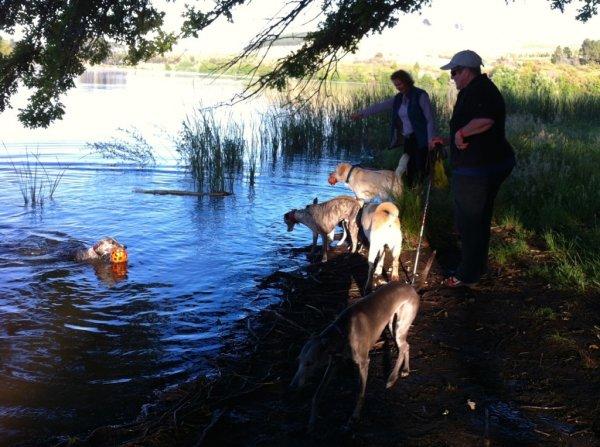 dog-swim-b