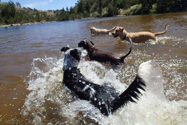 dog-swim-e