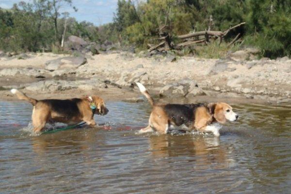 dog-swim-f