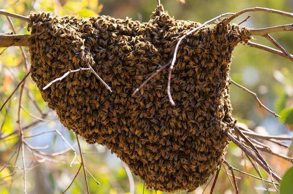 free-honey