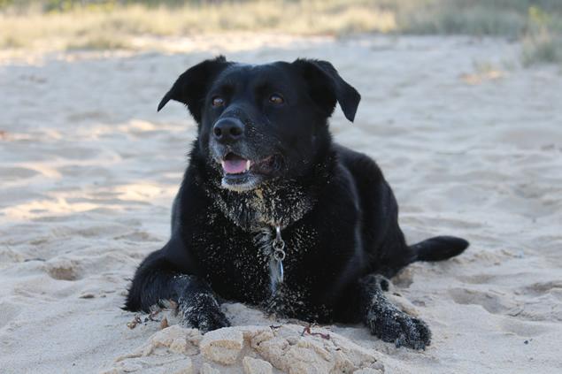 bruce-dog