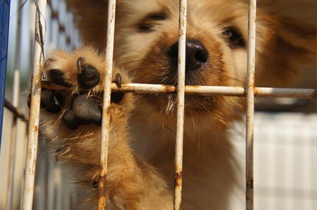 dog-pet-stock-221214