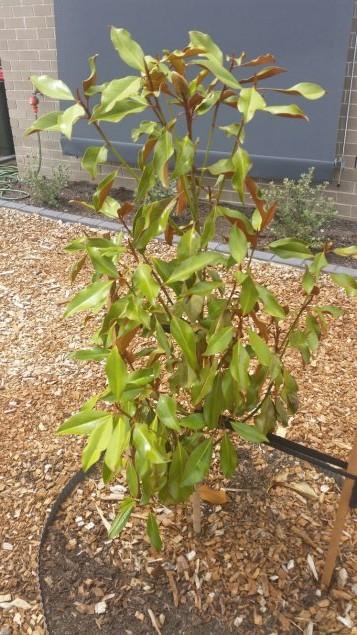 magnolia20150220_131100