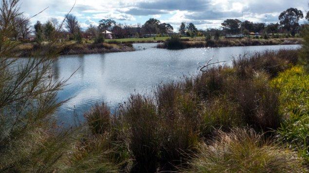 wetlands-P1070357