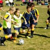 brindabella blues football club