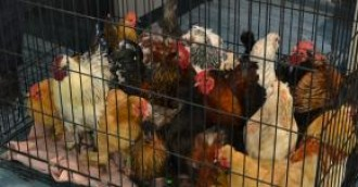 147 animals removed from Banks home