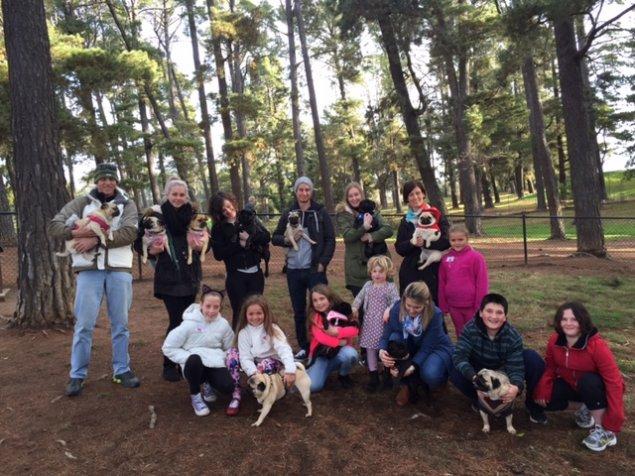 Pug Picnic Canberra