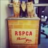 Vintage RSPCA