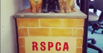 RSPCA ACT celebrates 60 years of animal welfare work