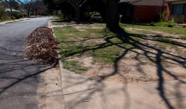 street-rakedLeaves-P1010598