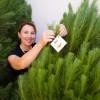 St Nicholas Christmas Trees 3