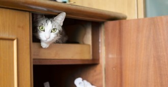 ACT is pet-friendly, unless you're renting