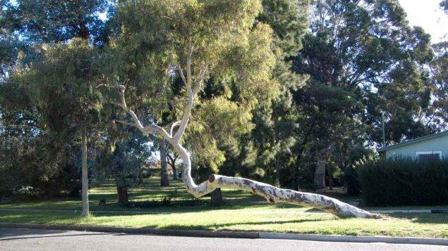 tree-70340