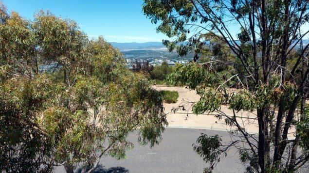 top-trees-P1150926