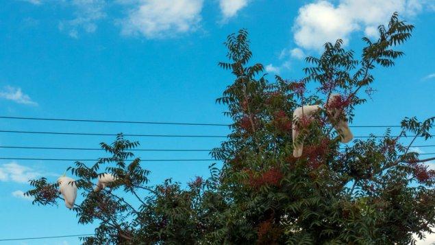 parrots-P1100201
