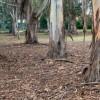 Parkland-trees-P1170194