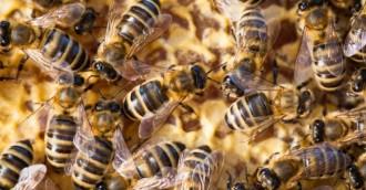 Beekeepers must be registered