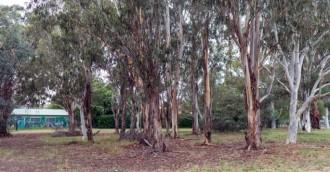 Dickson trees declared worth saving