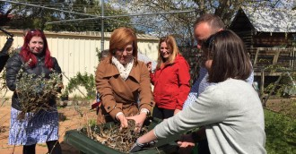 Green bins for all in next term  ALP