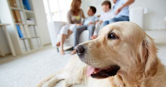 Does your home smell like your pets?
