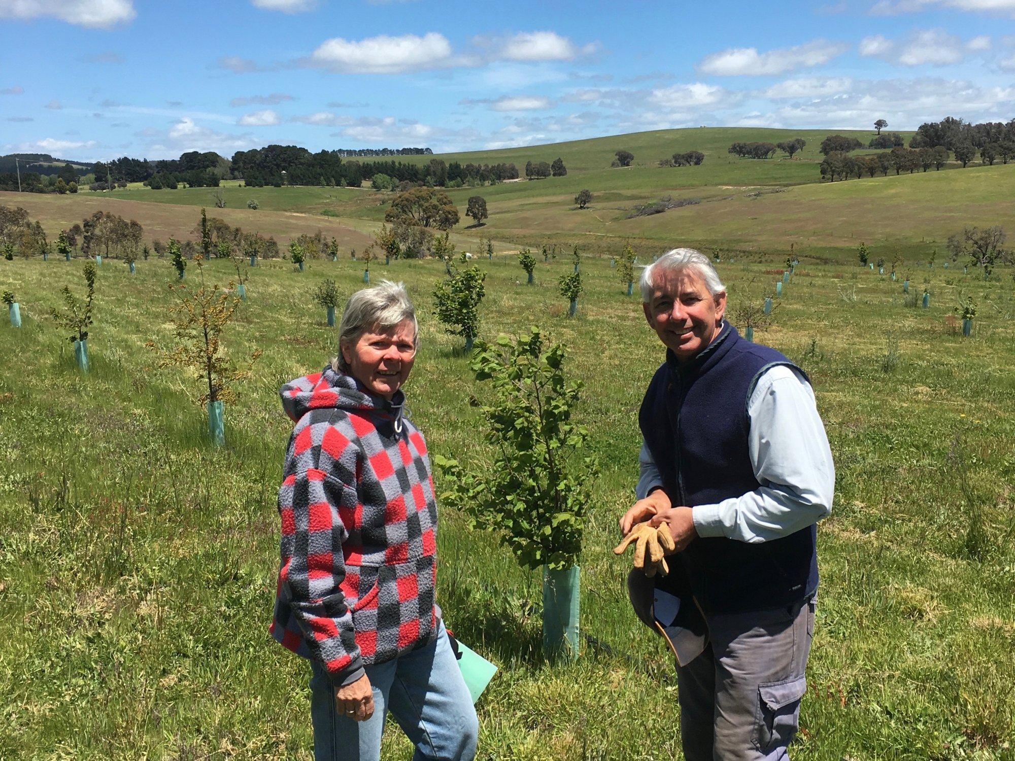 Chris and John Black check on the progress of their  young oak and hazelnut trees at Mangrove Farm, north of Taralga. Photo: John Thistleton.