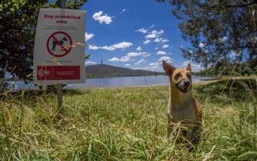 Ask RiotACT: Dogs banned at Yarralumla Bay beach area?