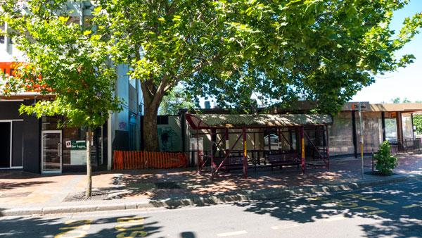 manula-tree-p1230313