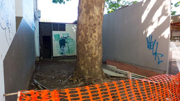 manula-tree-p1230315