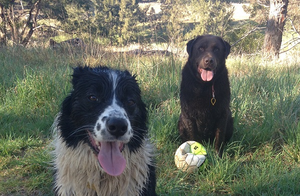 wet-dogs