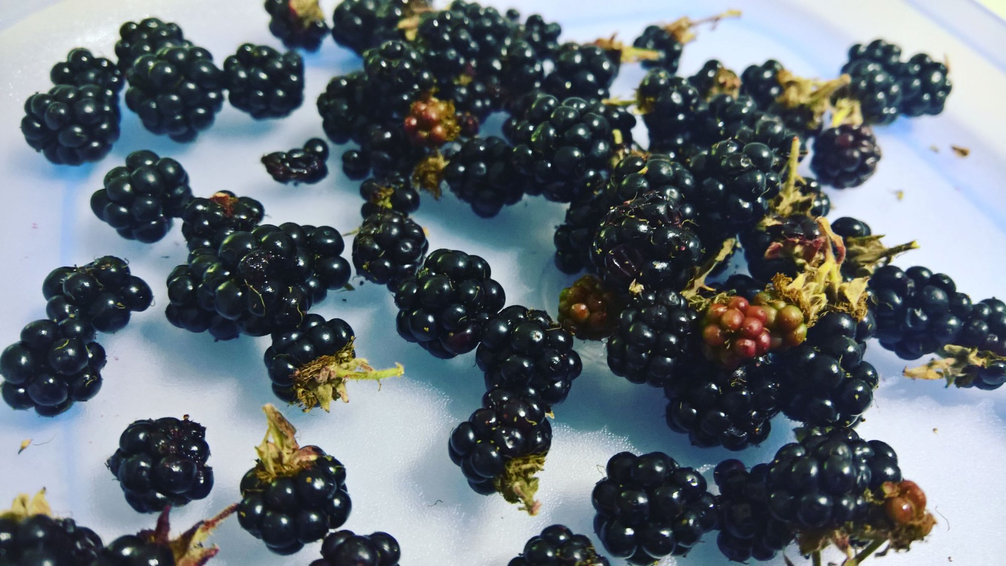 A pile of blackberries on a plate
