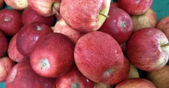 Promises, promises:  It isn't all apples in Pialligo