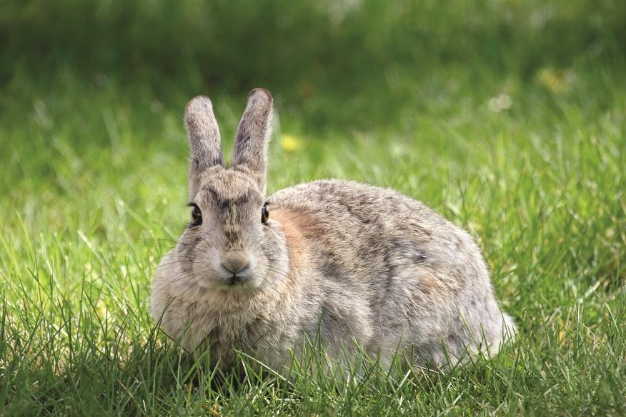 rabbit on the grass, focus on eyes